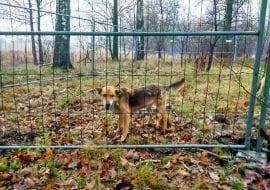 akcja charytatywna psu na budę warszawa ogrodzenia tymczasowe tlc rental www